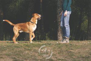 fotos-mascota-barcelona-almafotos-3